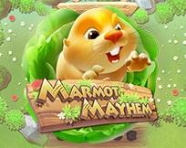 Marmot Mayhem